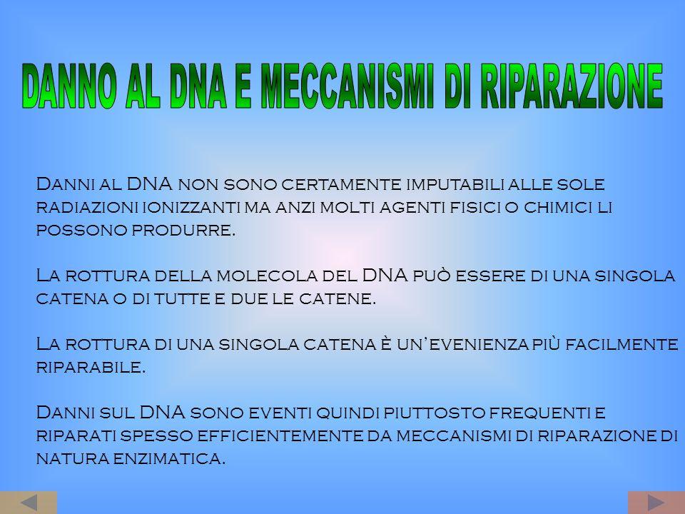 DANNO AL DNA E MECCANISMI DI RIPARAZIONE