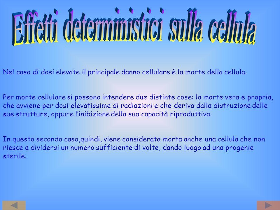 Effetti deterministici sulla cellula