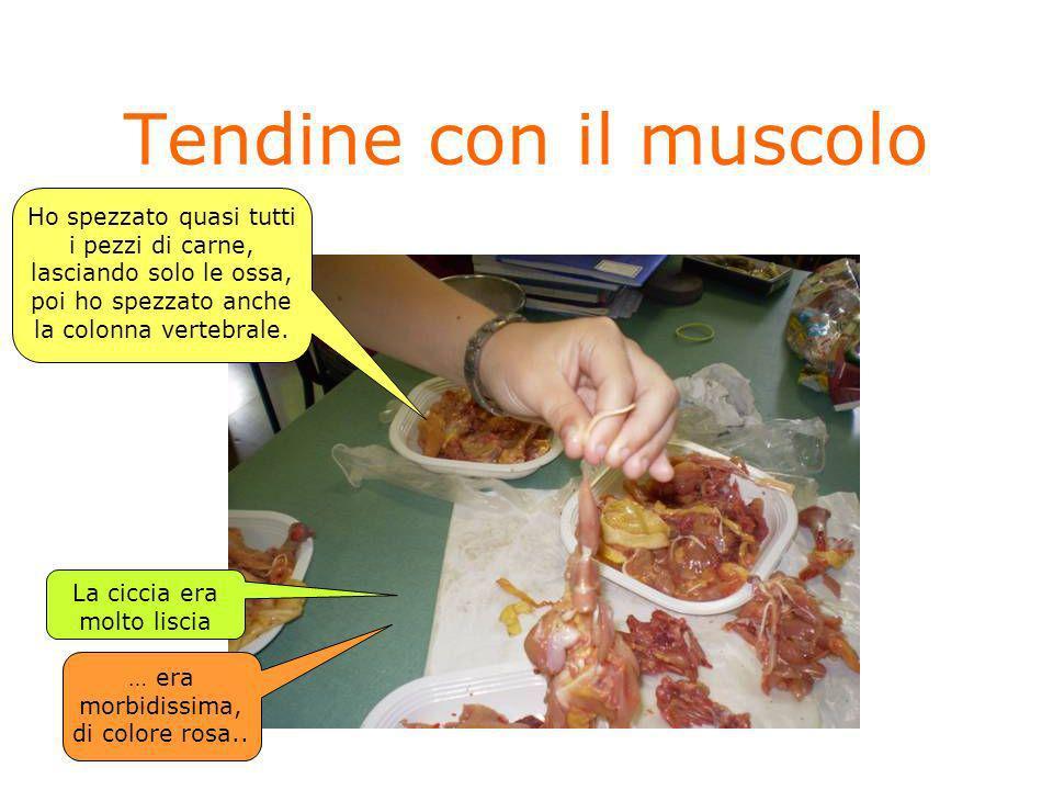 Tendine con il muscoloHo spezzato quasi tutti i pezzi di carne, lasciando solo le ossa, poi ho spezzato anche la colonna vertebrale.