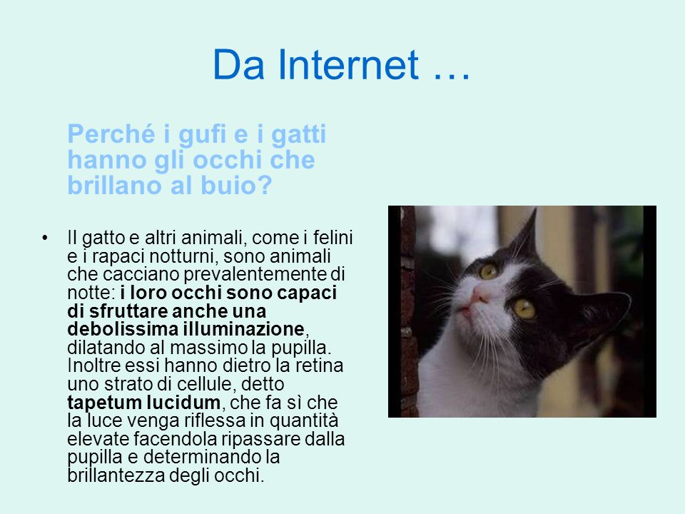 Da Internet … Perché i gufi e i gatti hanno gli occhi che brillano al buio