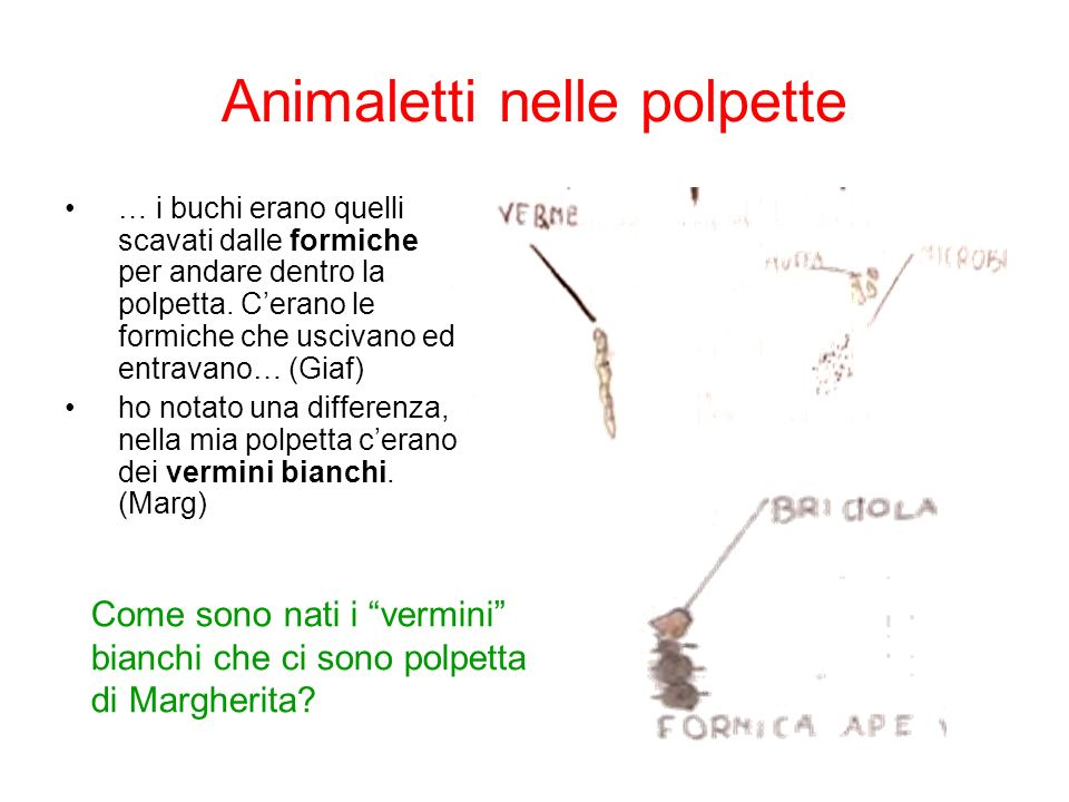Animaletti nelle polpette