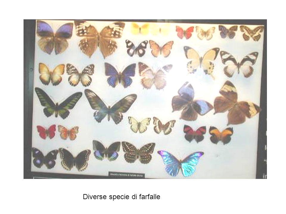 Diverse specie di farfalle