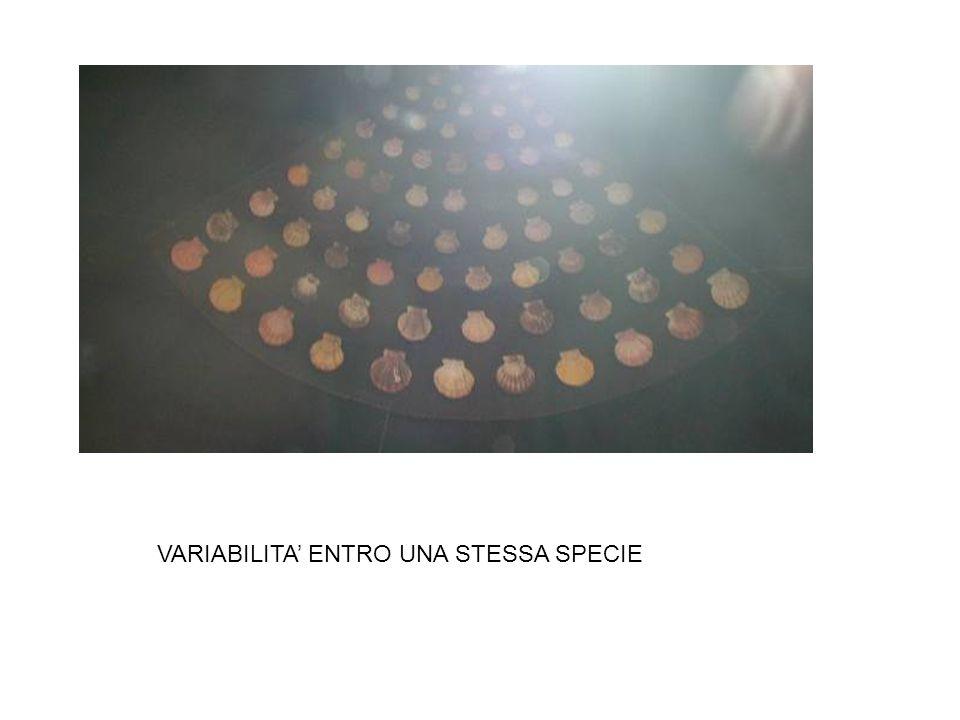 VARIABILITA' ENTRO UNA STESSA SPECIE