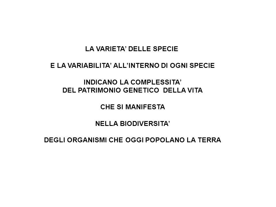 LA VARIETA' DELLE SPECIE E LA VARIABILITA' ALL'INTERNO DI OGNI SPECIE