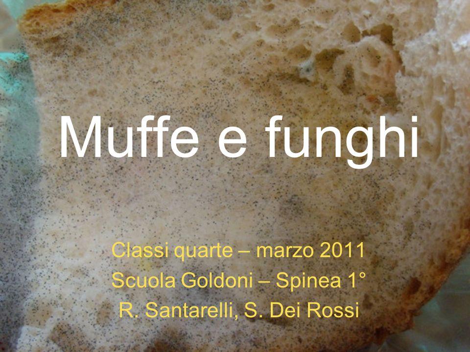 Muffe e funghi Classi quarte – marzo 2011 Scuola Goldoni – Spinea 1°
