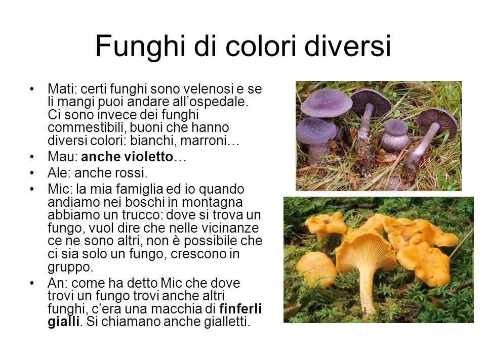 Funghi di colori diversi