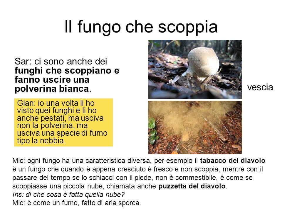 Il fungo che scoppia Sar: ci sono anche dei funghi che scoppiano e fanno uscire una polverina bianca.