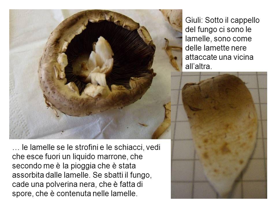 Giuli: Sotto il cappello del fungo ci sono le lamelle, sono come delle lamette nere attaccate una vicina all'altra.
