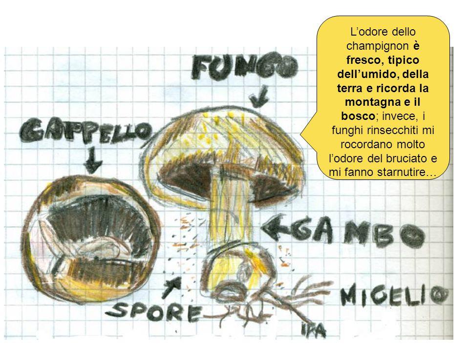L'odore dello champignon è fresco, tipico dell'umido, della terra e ricorda la montagna e il bosco; invece, i funghi rinsecchiti mi rocordano molto l'odore del bruciato e mi fanno starnutire…