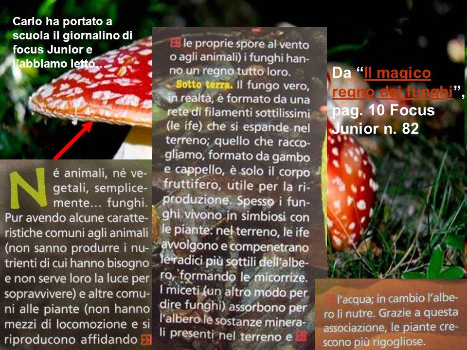 Da Il magico regno dei funghi , pag. 10 Focus Junior n. 82
