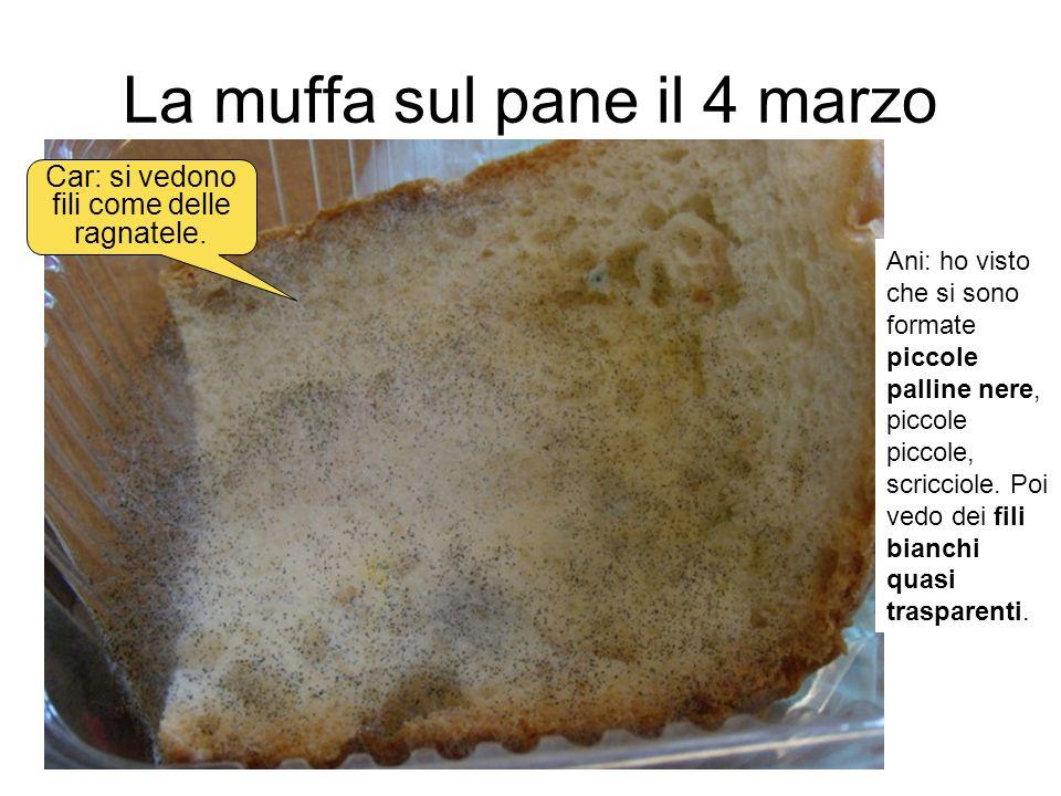 La muffa sul pane il 4 marzo