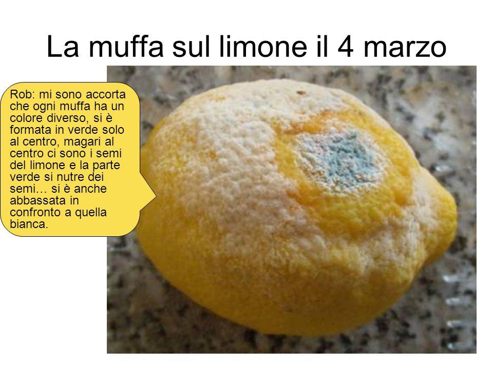 La muffa sul limone il 4 marzo
