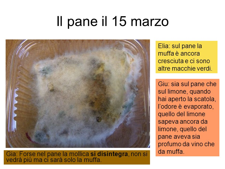 Il pane il 15 marzo Elia: sul pane la muffa è ancora cresciuta e ci sono altre macchie verdi.