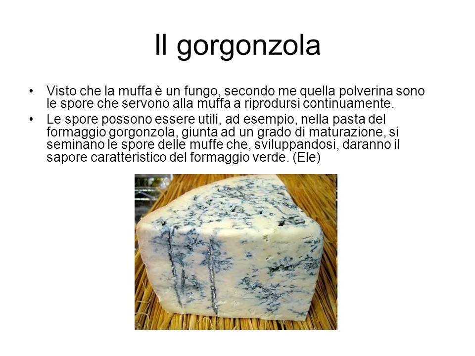 Il gorgonzola Visto che la muffa è un fungo, secondo me quella polverina sono le spore che servono alla muffa a riprodursi continuamente.