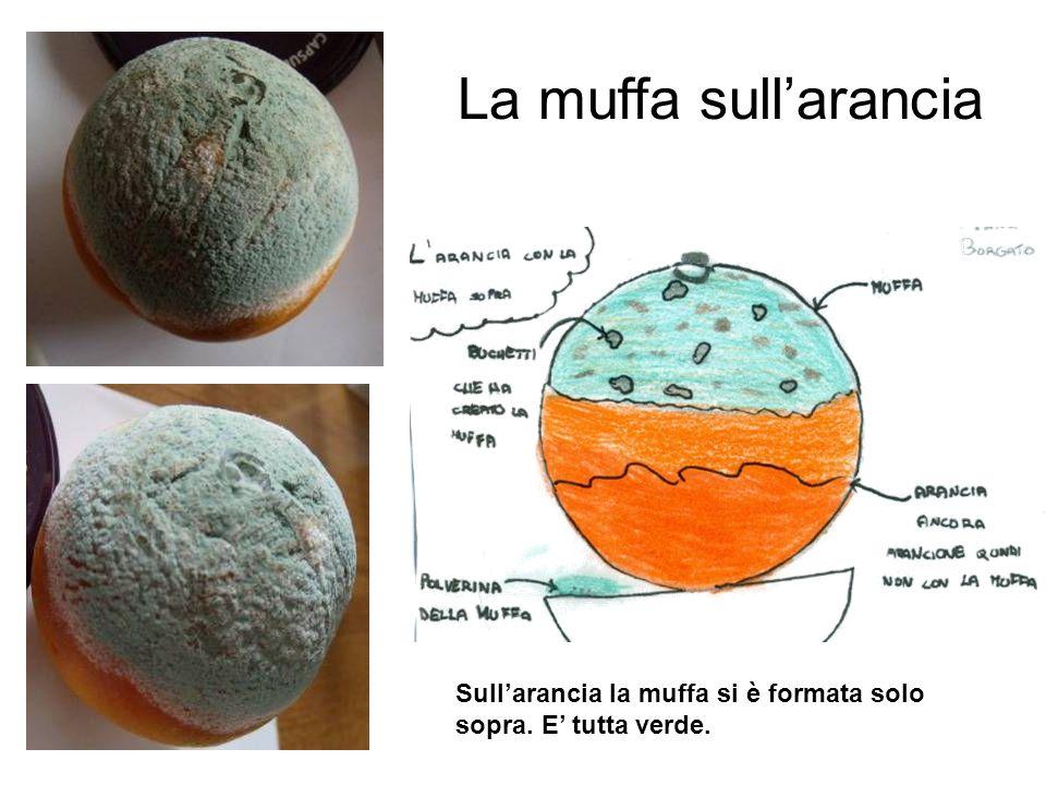 La muffa sull'arancia Sull'arancia la muffa si è formata solo sopra. E' tutta verde.