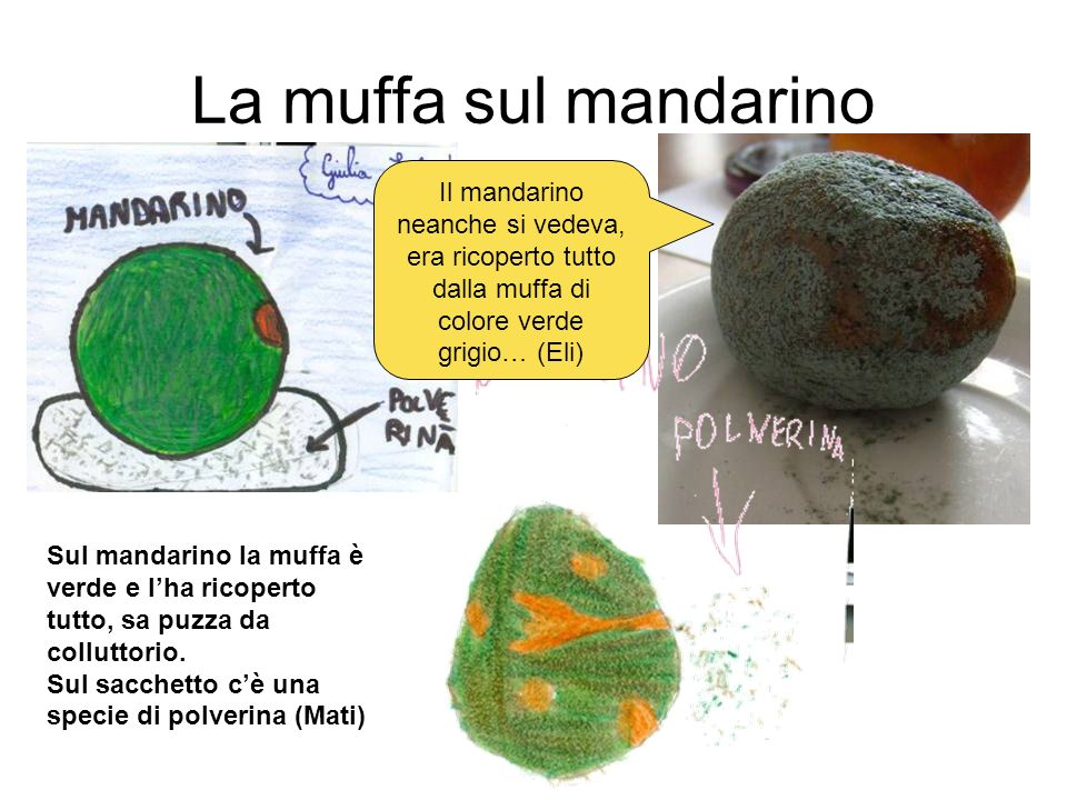 La muffa sul mandarino Il mandarino neanche si vedeva, era ricoperto tutto dalla muffa di colore verde grigio… (Eli)