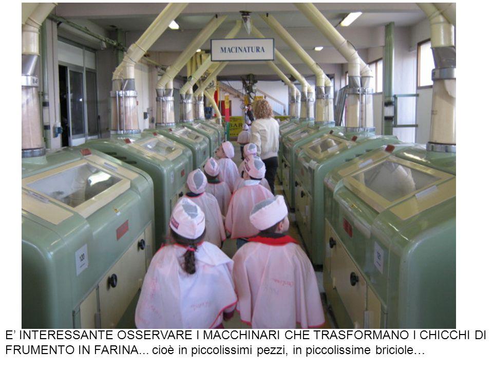 E' INTERESSANTE OSSERVARE I MACCHINARI CHE TRASFORMANO I CHICCHI DI FRUMENTO IN FARINA...