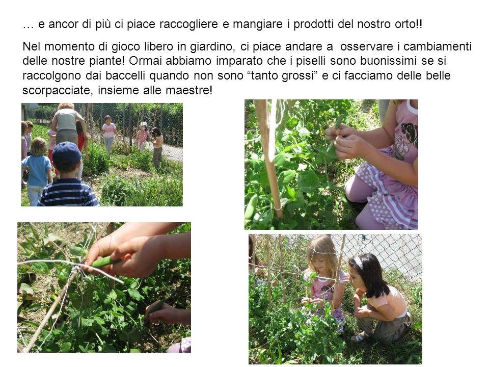 … e ancor di più ci piace raccogliere e mangiare i prodotti del nostro orto!!