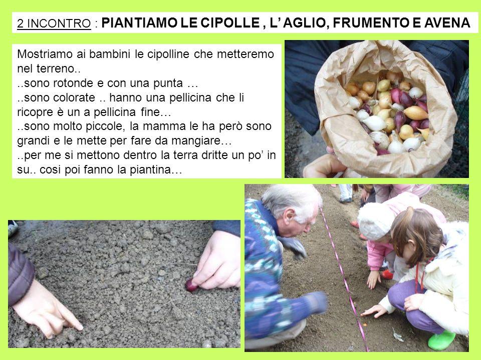 2 INCONTRO : PIANTIAMO LE CIPOLLE , L' AGLIO, FRUMENTO E AVENA