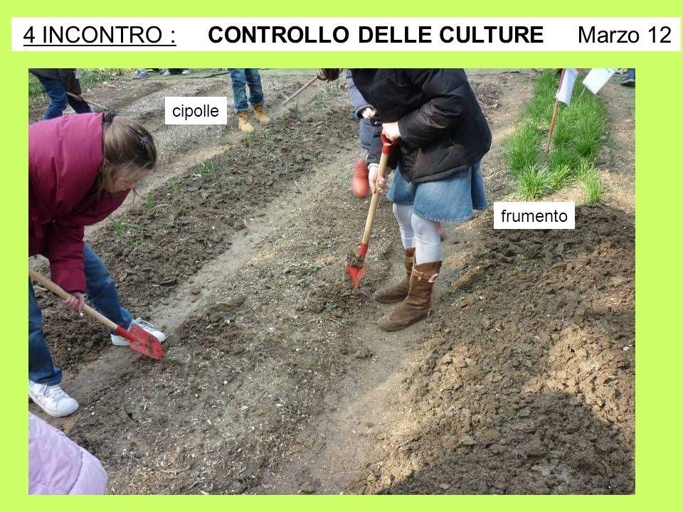 4 INCONTRO : CONTROLLO DELLE CULTURE Marzo 12
