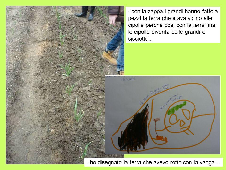 ..con la zappa i grandi hanno fatto a pezzi la terra che stava vicino alle cipolle perché così con la terra fina le cipolle diventa belle grandi e cicciotte..