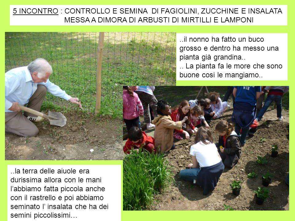 5 INCONTRO : CONTROLLO E SEMINA DI FAGIOLINI, ZUCCHINE E INSALATA