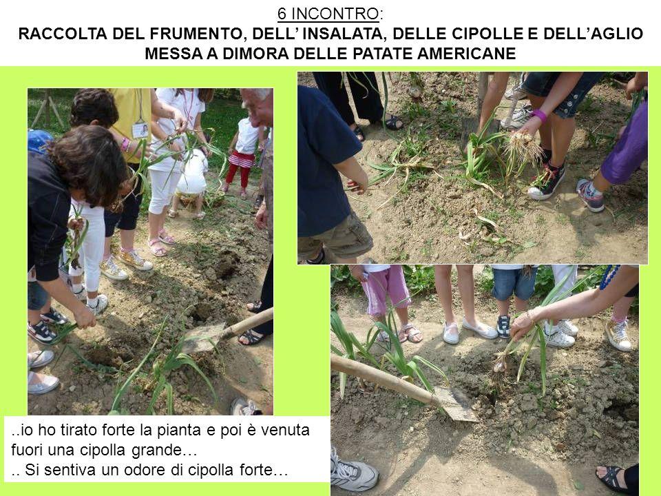 RACCOLTA DEL FRUMENTO, DELL' INSALATA, DELLE CIPOLLE E DELL'AGLIO
