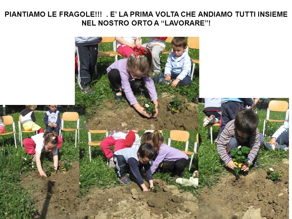 PIANTIAMO LE FRAGOLE!!! . E' LA PRIMA VOLTA CHE ANDIAMO TUTTI INSIEME NEL NOSTRO ORTO A LAVORARE !