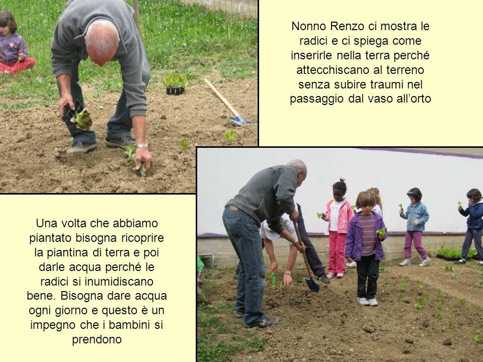 Nonno Renzo ci mostra le radici e ci spiega come inserirle nella terra perché attecchiscano al terreno senza subire traumi nel passaggio dal vaso all'orto