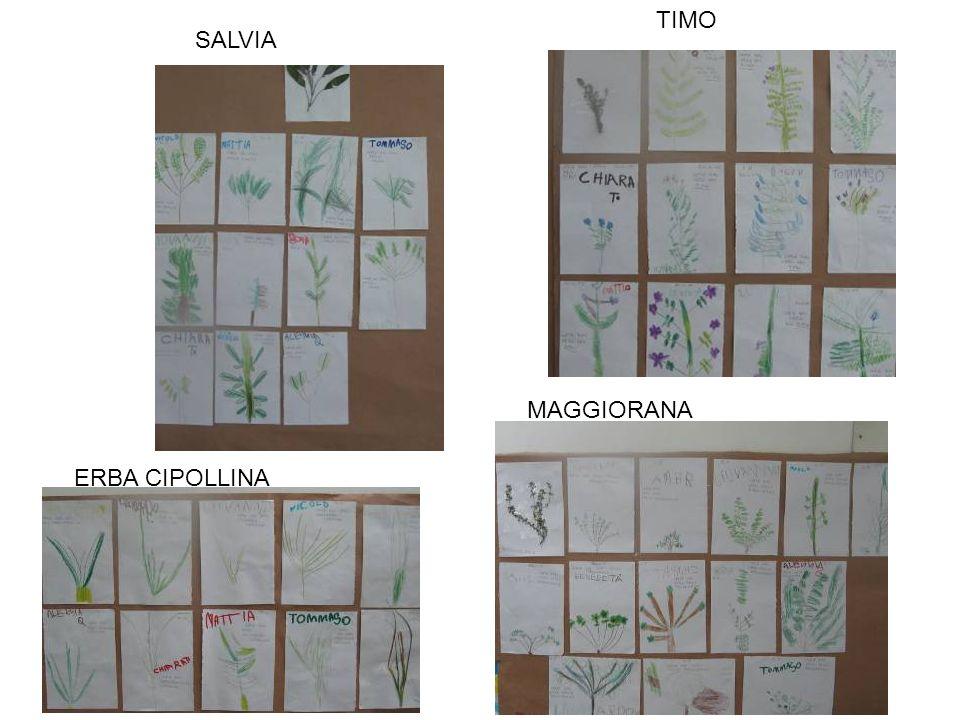 TIMO SALVIA MAGGIORANA ERBA CIPOLLINA