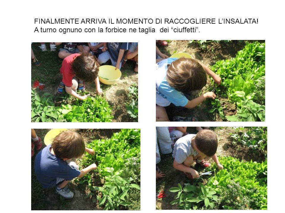 FINALMENTE ARRIVA IL MOMENTO DI RACCOGLIERE L'INSALATA!