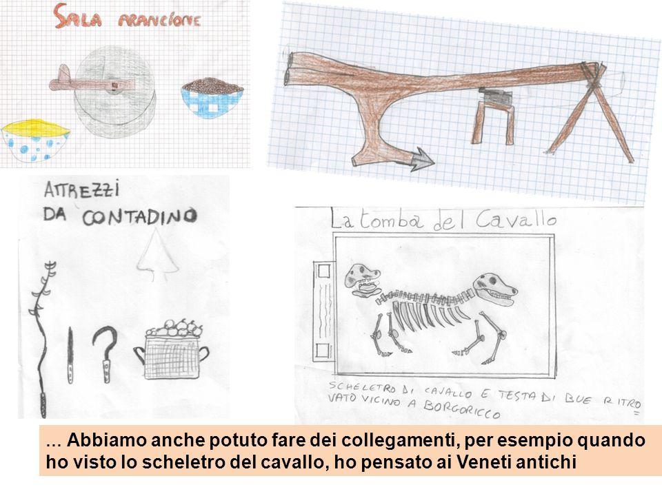 … Abbiamo anche potuto fare dei collegamenti, per esempio quando ho visto lo scheletro del cavallo, ho pensato ai Veneti antichi