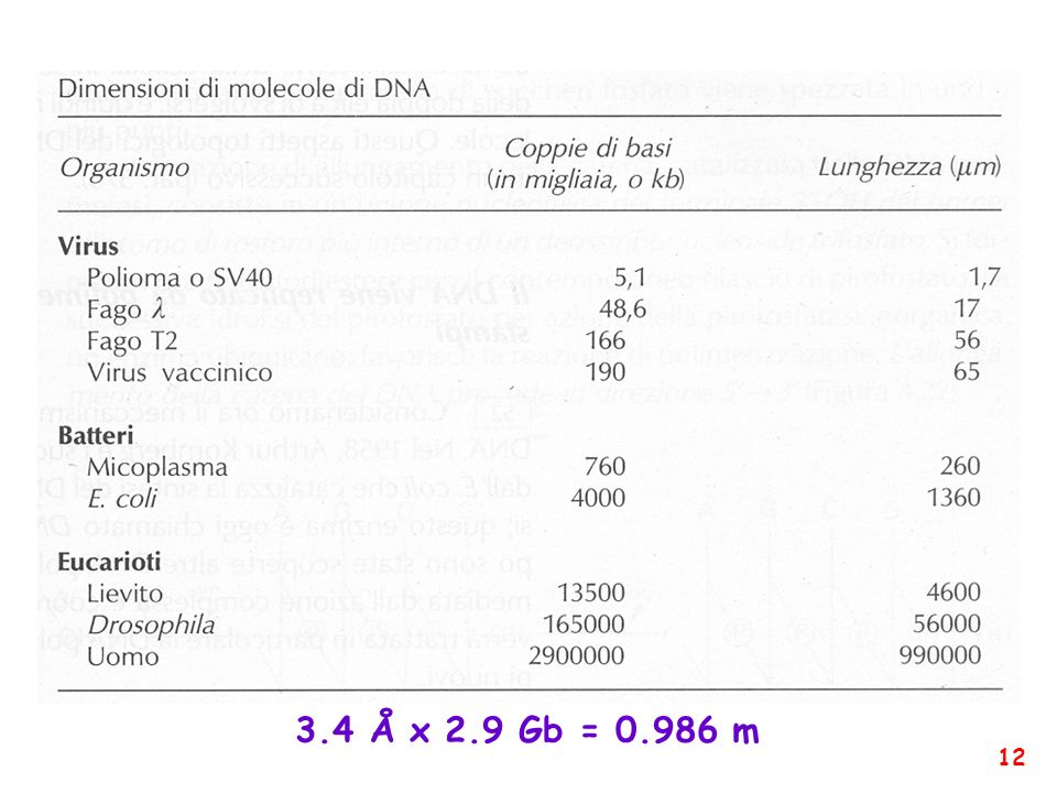 3.4 Å x 2.9 Gb = 0.986 m