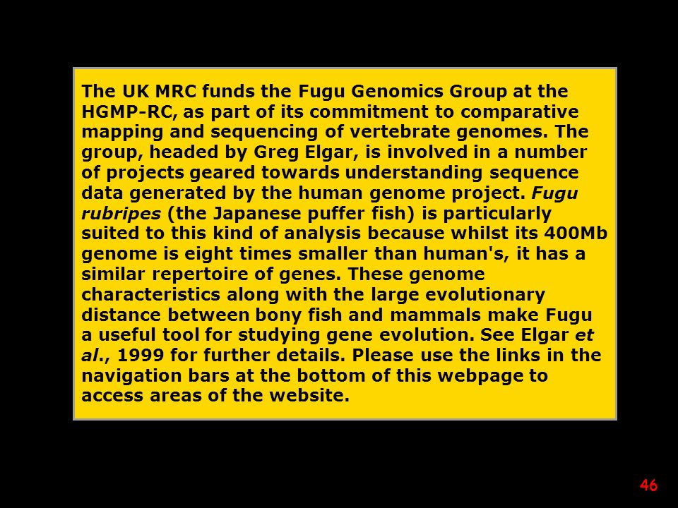 The UK MRC funds the Fugu Genomics Group at the HGMP-RC, as part of its commitment to comparative mapping and sequencing of vertebrate genomes.