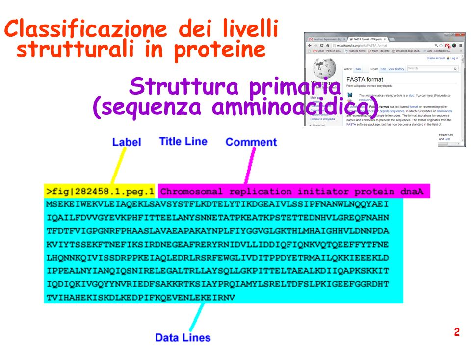 Classificazione dei livelli strutturali in proteine