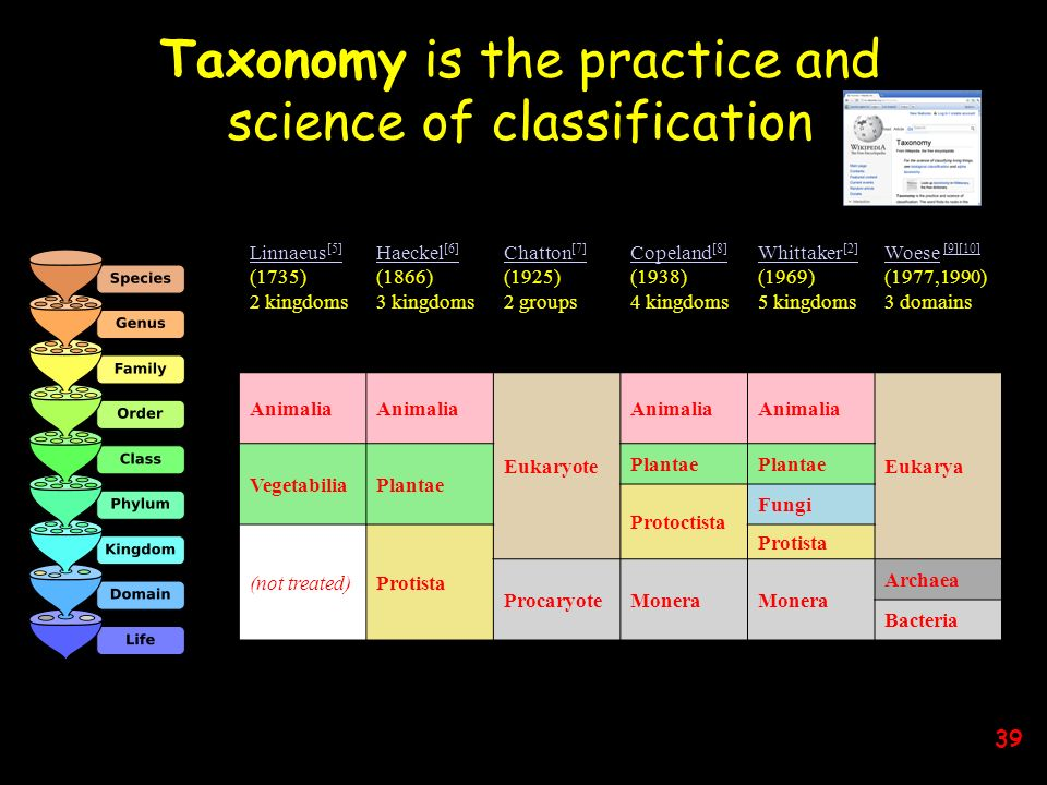 Taxonomy is the practice and science of classification