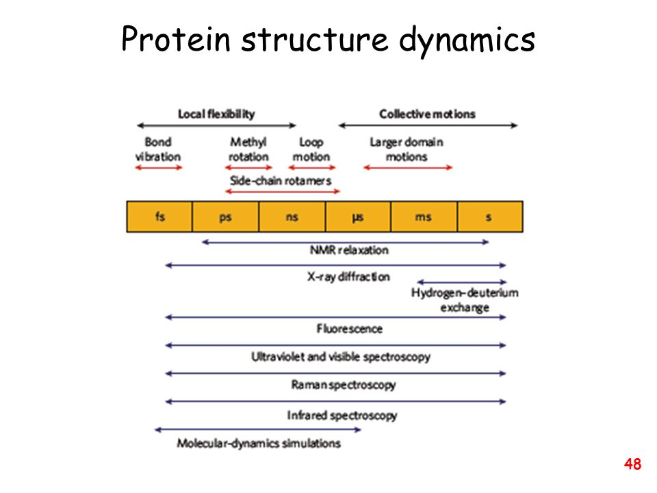 Protein structure dynamics