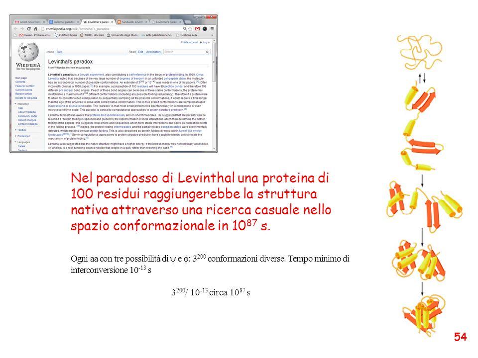 Nel paradosso di Levinthal una proteina di 100 residui raggiungerebbe la struttura nativa attraverso una ricerca casuale nello spazio conformazionale in 1087 s.