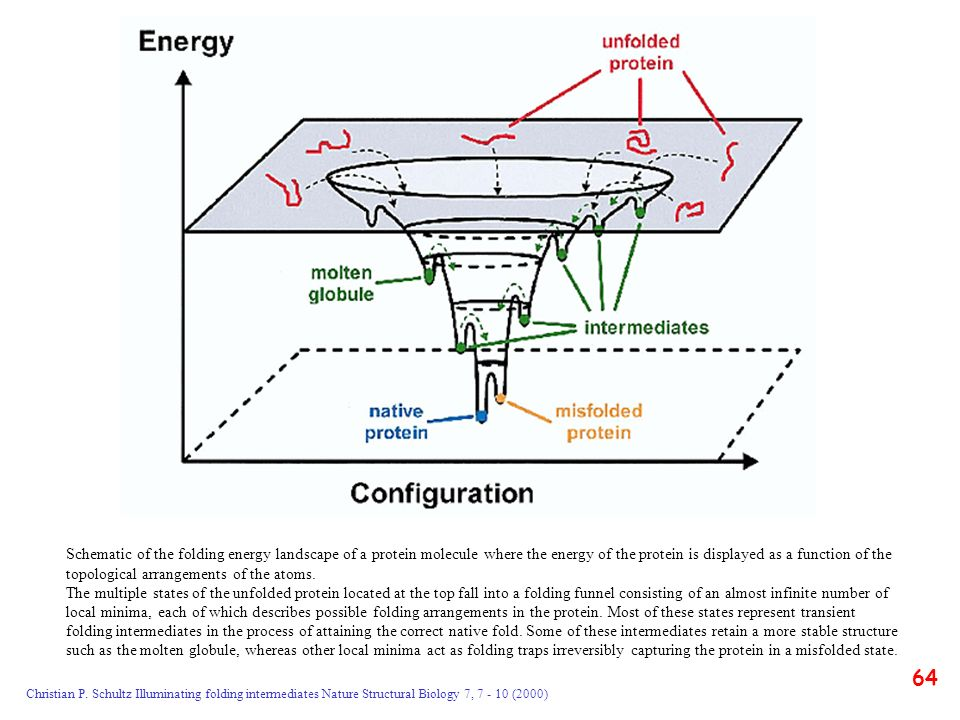 Schematic of the folding energy landscape of a protein molecule where the energy of the protein is displayed as a function of the topological arrangements of the atoms.