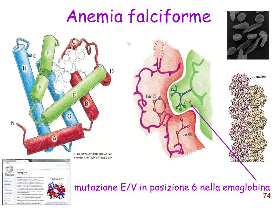 Anemia falciforme mutazione E/V in posizione 6 nella emoglobina