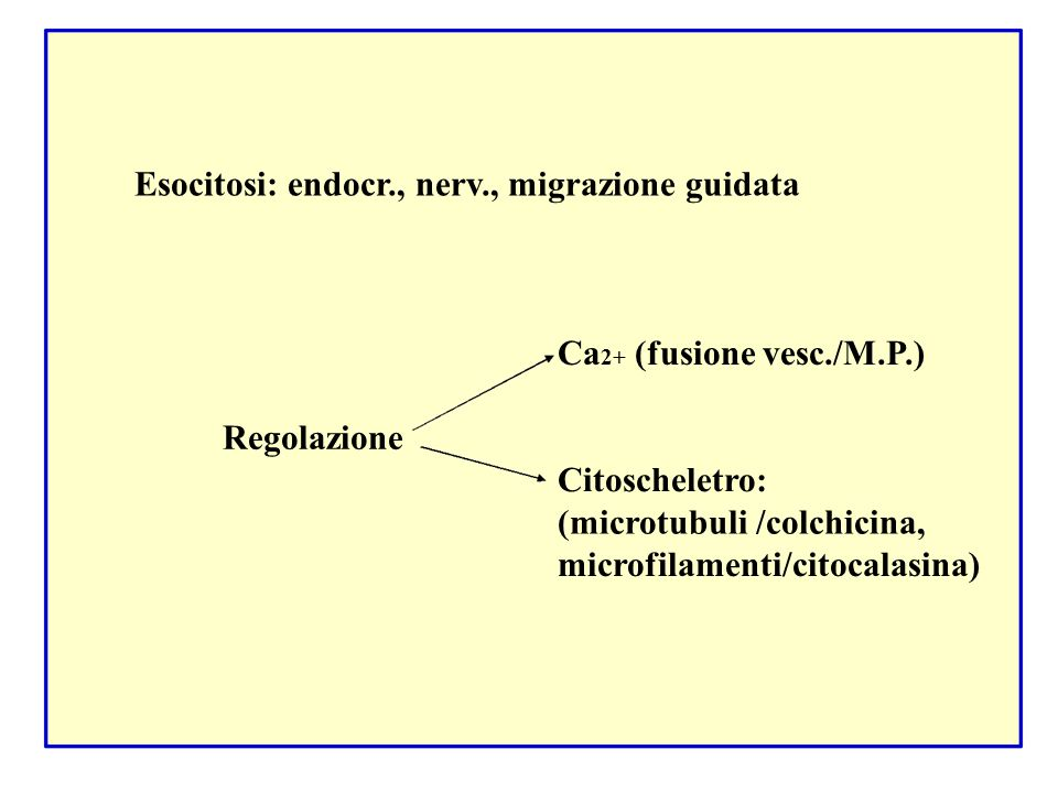 Esocitosi: endocr., nerv., migrazione guidata