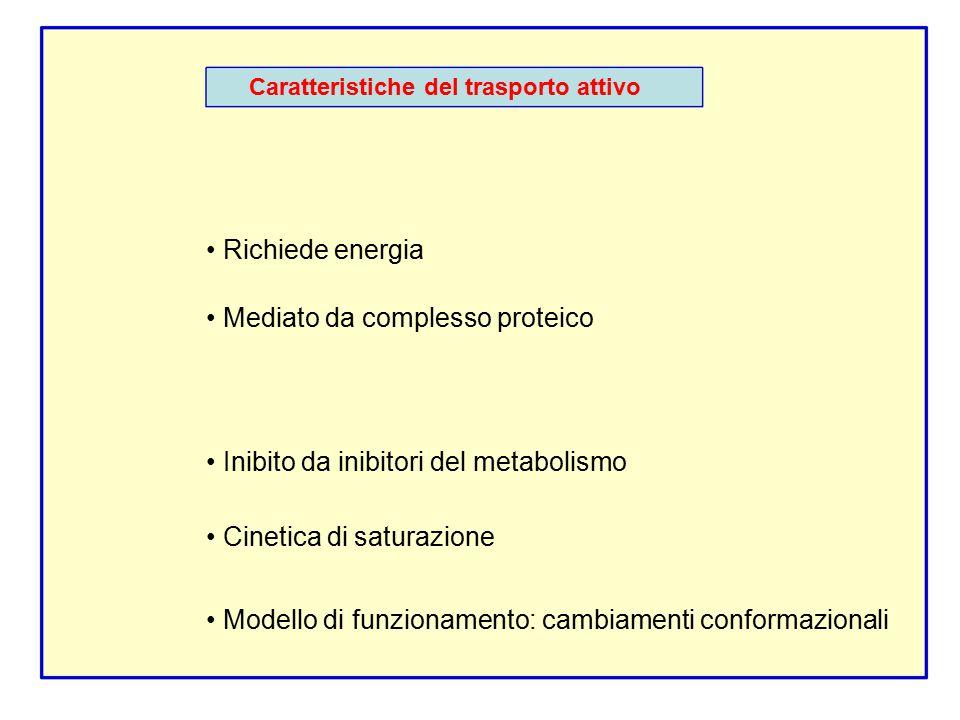 • Mediato da complesso proteico