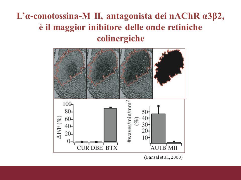 L'α-conotossina-M II, antagonista dei nAChR α3β2, è il maggior inibitore delle onde retiniche colinergiche