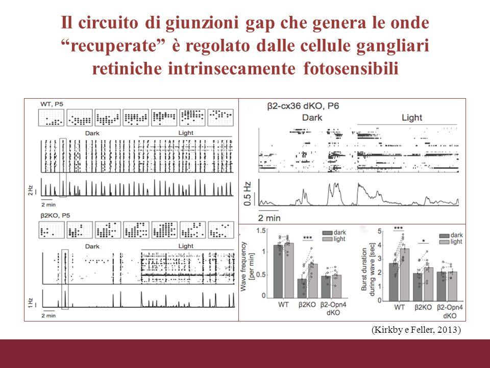 Il circuito di giunzioni gap che genera le onde recuperate è regolato dalle cellule gangliari retiniche intrinsecamente fotosensibili