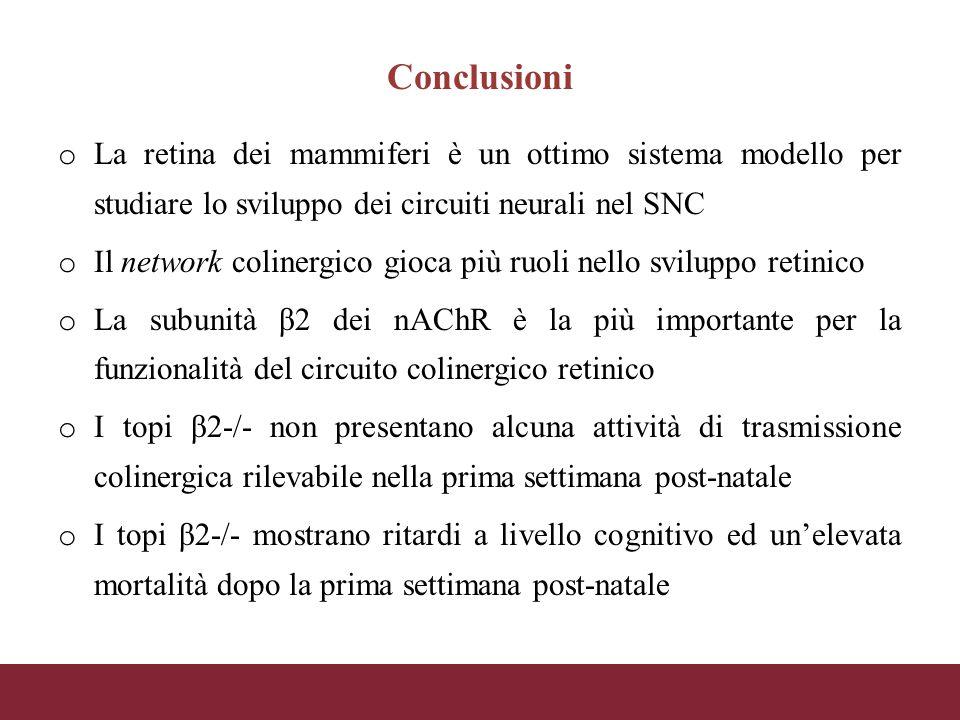 Conclusioni La retina dei mammiferi è un ottimo sistema modello per studiare lo sviluppo dei circuiti neurali nel SNC.