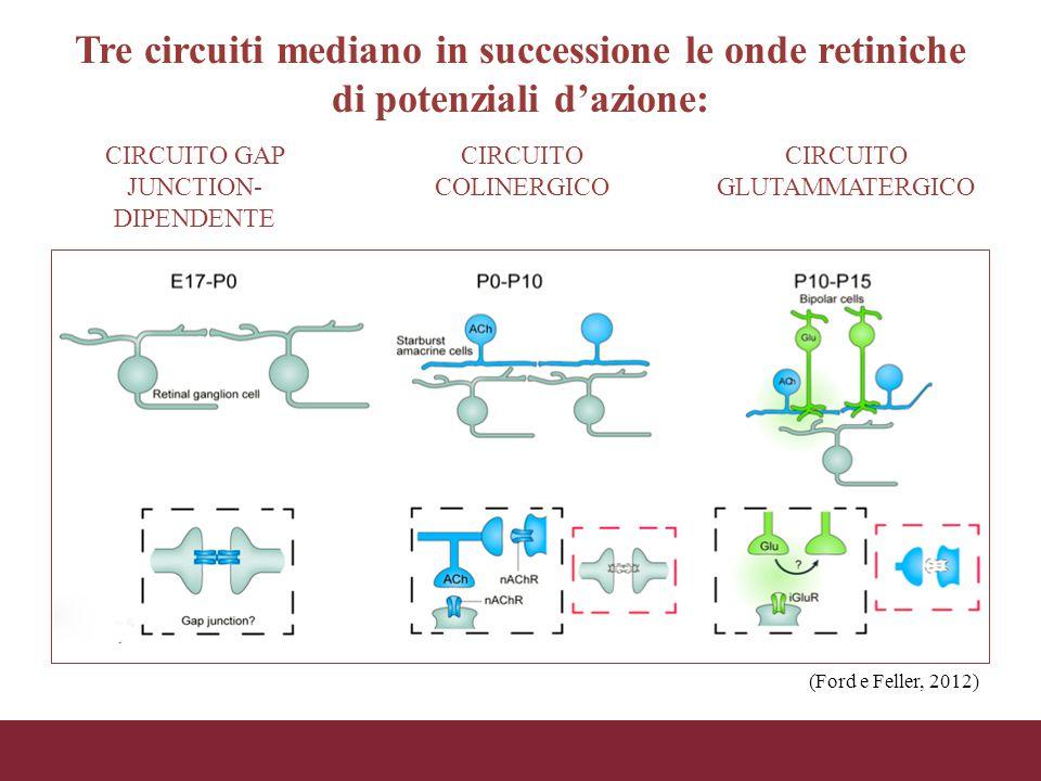 Tre circuiti mediano in successione le onde retiniche di potenziali d'azione: