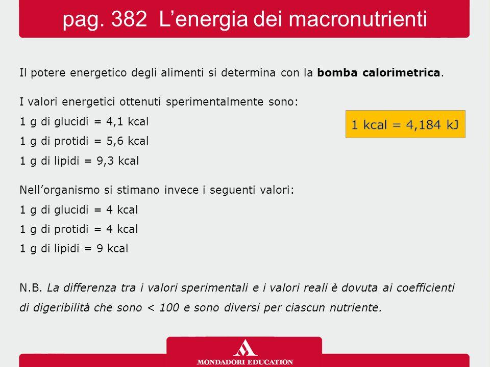 pag. 382 L'energia dei macronutrienti