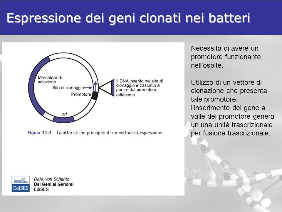 Espressione dei geni clonati nei batteri