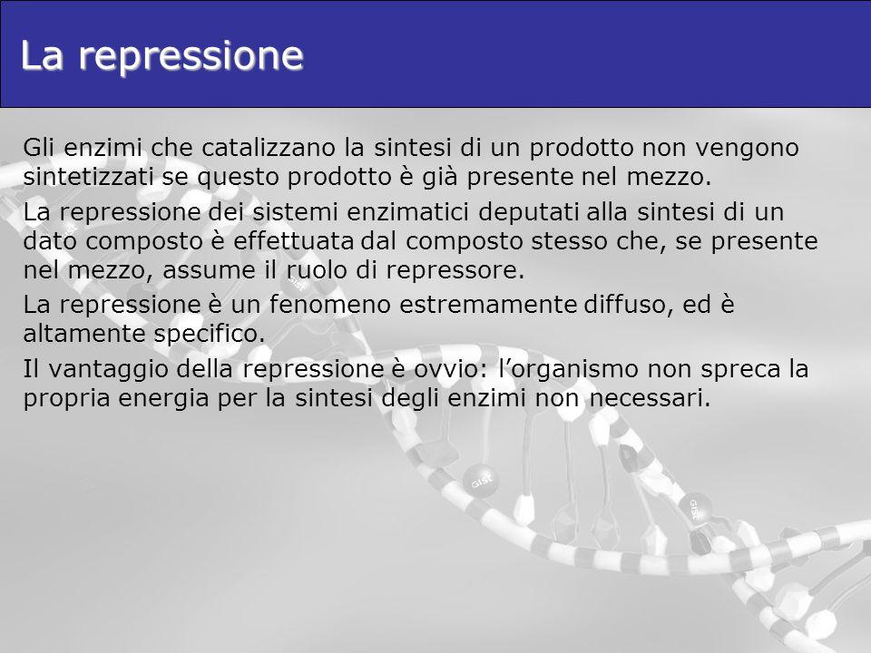 La repressioneGli enzimi che catalizzano la sintesi di un prodotto non vengono sintetizzati se questo prodotto è già presente nel mezzo.