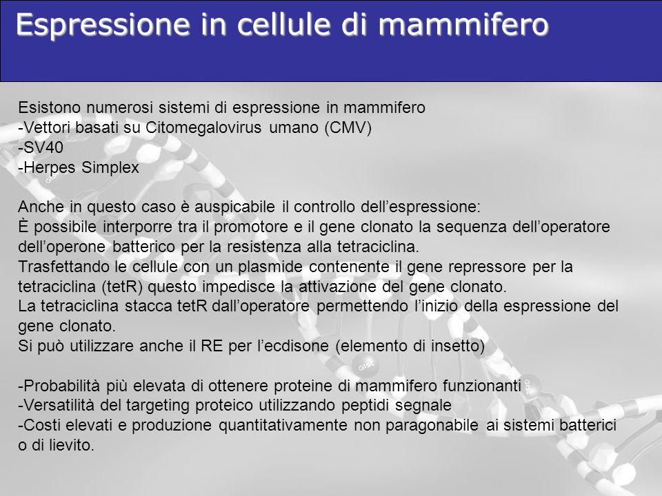 Espressione in cellule di mammifero